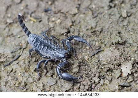 Image of a scorpion on the ground.