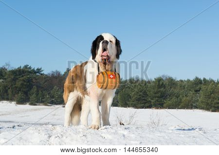 Rescue dog with wooden barrel in snow