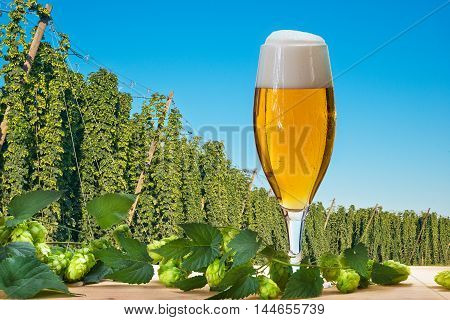 Glass of beer with hop field befor harvestCzech Hops