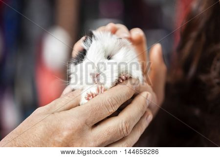 Customer And Salesman Holding Cute Guinea Pig In Store