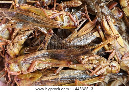 fried grasshopperThis local popular Thai food of northeast people for the design food background.