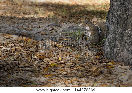 The squirrel autumn day in the US National Parks