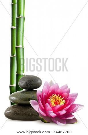bamboo, lotus flower and pebble