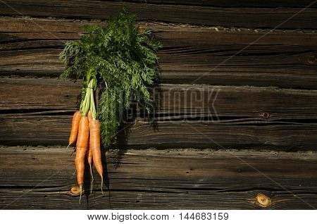 Carrots with green tops in a beam on the wooden background