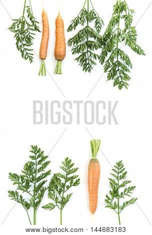 Composition of a carrots and carrot tops on white background