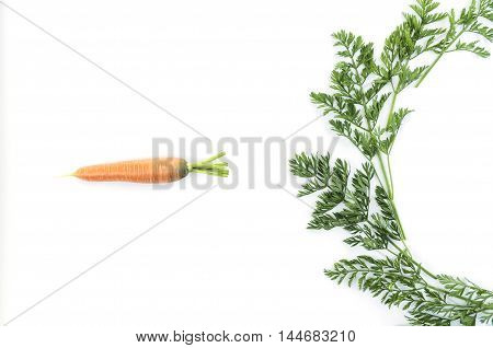Composition of a carrot and carrot tops on white background