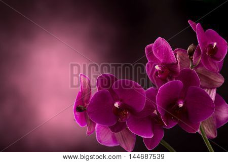 Magenta orchid flower at right of dark blurred background