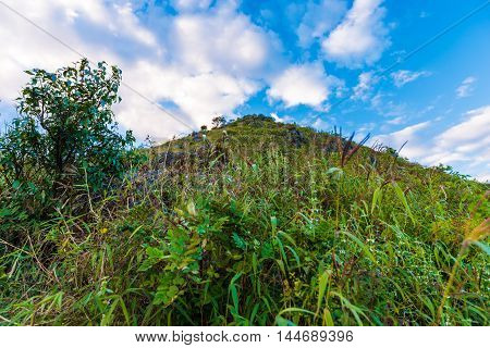Summer Sub Alpine Mountain In The Chiangmai Highlands