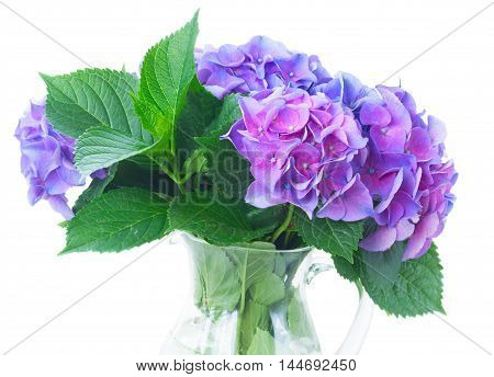 blue and violet hortensia flowers and leaves in vase close up isolated on white background