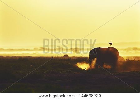 Silhouette Of An Elephant.