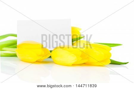 yellow tulips flowers with blank for text on a white background