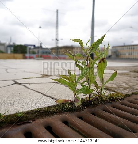 struggle for survival of a plant on a railway platform in Magdeburg