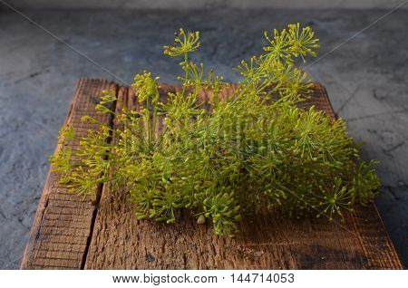 Fresh dill for pickling cucumbers on a wooden cutting board