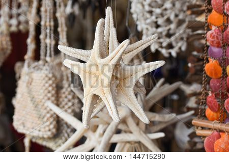 White starfish - sea-star in front of a store for sale.