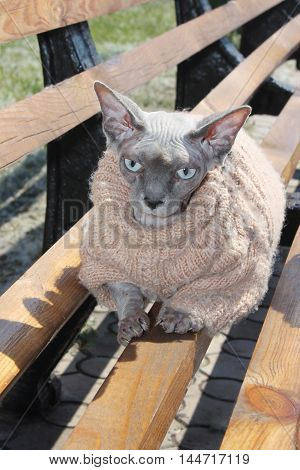 Purebred Cat on a bench on a sunny day