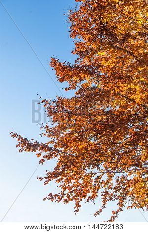 Red autumn leaves against blue sky abstract background
