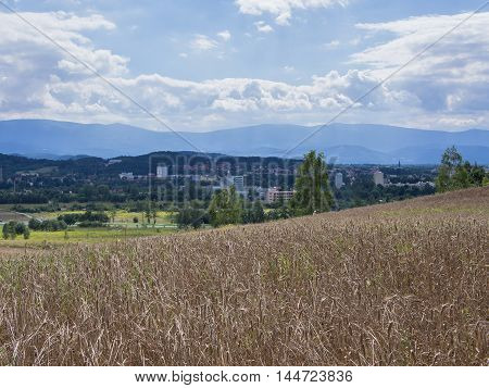 Wheat Field In A Hilly Landscape In Jelenia Gora Silesia Poland