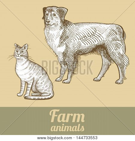 Herding dog and cat. Series vector illustration of farm animals. Style vintage engraving.