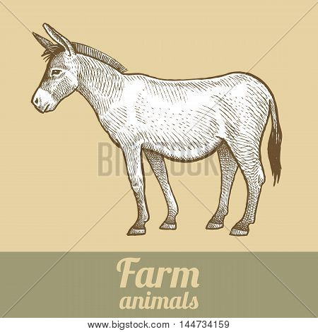 Donkey. Series vector illustration of farm animals. Style vintage engraving.