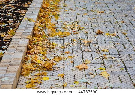 footpath with fallen yellow leaves in the park.