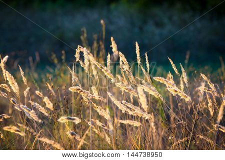 abstract dry grass on meadow