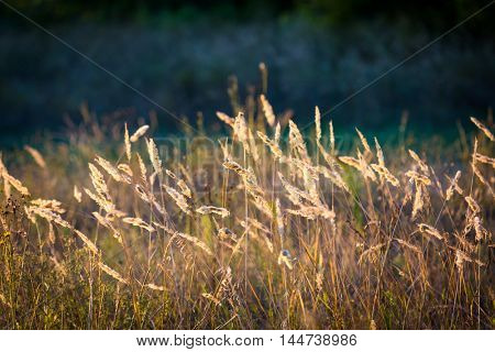 dry grass on summer meadow