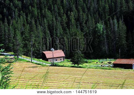 Hay lays in field ready to be baled. Rustic log barn sits besides quiet country lane in the foothills of the Absaroka Mountain Range. Hiustoric barn has been restored with new tin roof.