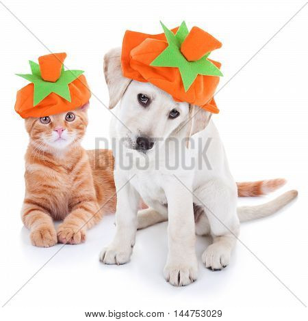 Thanksgiving Halloween Pumpkin Costume Pets Dog and Cat