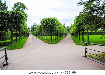 Alley Of Tsarskoye Selo In St. Petersburg