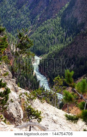Curving Yellowstone River travels through the Grand Canyon of the Yellowstone. Evergreen forest clings to steep sides of canyon in Yellowstone National Park in Wyoming.
