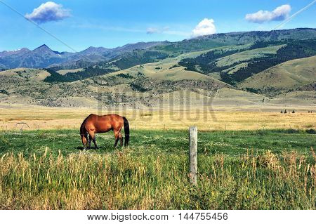 Lone horse grazes in meadow at the base of the Gallatin Range in Montana. Meadow is in Paradise Valley.
