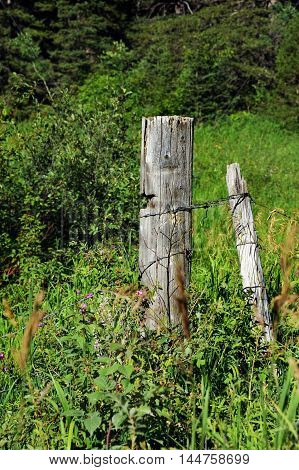 Rough hewn logs serve as posts in this dilapidated and broken boundary fence. Weeds and grass overgrow posts.
