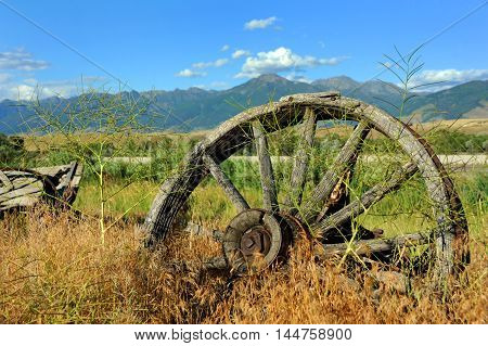 Weathered and rusting wagon wheel sits overgrown by weeds in Paradise Valley Montana.