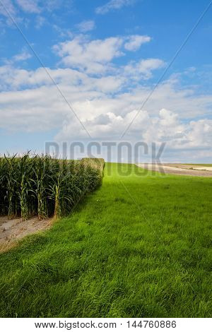 Corn field and sky with beautiful clouds / Corn field