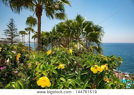 Beautiful beach. View of nice tropical shore with palms around. Untouched tropical beach. Holiday and vacation concept