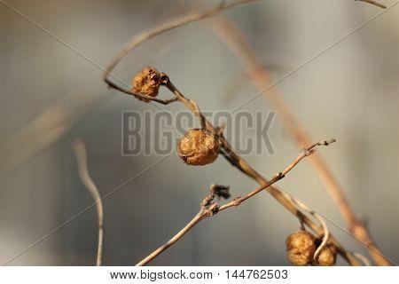 Yellow fetus - macro fragment plant branch tree