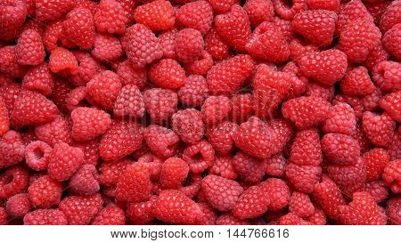 Background from ripe red raspberries without leaves