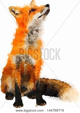 watercolor hand painted Fox with red and black and white hair.