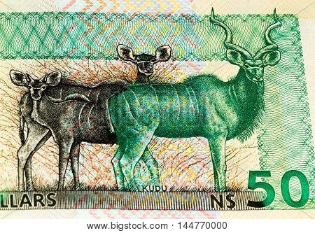 50 Namibian dollars bank note of Namibia. Namibian dollars is the national currency of Namibia