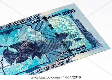 2000 Ugandan shillings bank note. Ugandan shilling is the national currency of Uganda