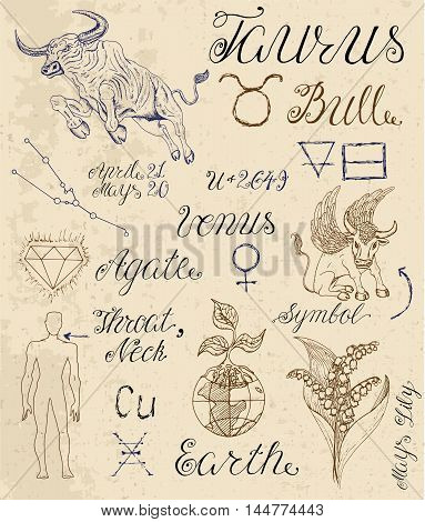 Collection of hand drawn symbols for astrological zodiac sign Bull. Line art vector illustration of engraved horoscope set. Doodle drawing and sketch with calligraphic lettering