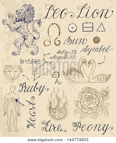 Collection of hand drawn symbols for astrological zodiac sign Lion or Leo. Line art vector illustration of engraved horoscope set. Doodle drawing and sketch with calligraphic lettering