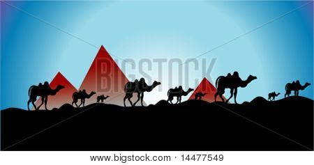 vector Egypt and camel run sunset background