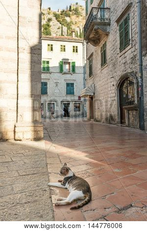 Cat on the cobbled street of medieval Kotor, Montenegro