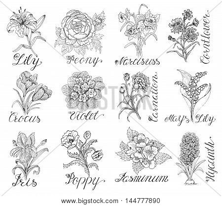 Set of hand drawn graphic flowers - lily, peony, narcissus, violet, crocus, poppy. Line art engraved vector illustrations isolated on white. Doodle drawing and sketch with calligraphic lettering.