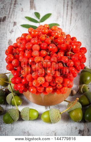 Bunch Of Red Rowan With Leaves And Acorns On Rustic Wooden Background