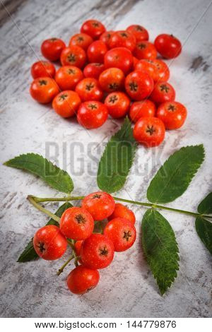 Bunch Of Red Rowan With Leaves On Rustic Wooden Background