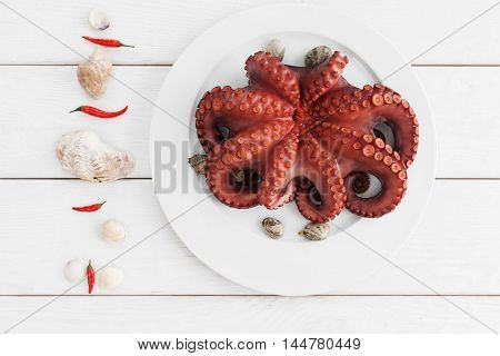 Whole fresh raw octopus on white plate with tentacles flat lay. Seafood delicatessen ready for cooking with chili and sea shells on white background. Mediterranean meal, luxury food concept