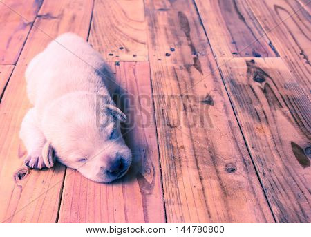 Puppy lying on a light background vintage.