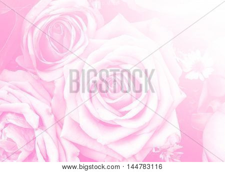 rose flower nature background design love Valentines day for design background color filter